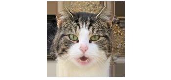 猫と発達障害グレーゾーンの生活