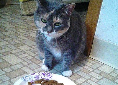 ネコ好き大人の発達障害グレーゾーンとは、ASDやADHD腸内環境と食事